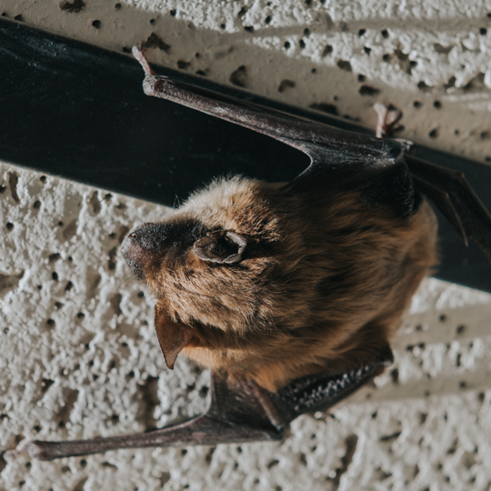 bat out of the home